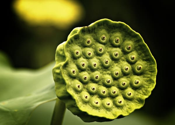 What Is Trypophobia Symptoms Causes Diagnosis Treatment And