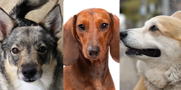 Here S A Quiz To See If You Can Name That Dog A Dog S Love