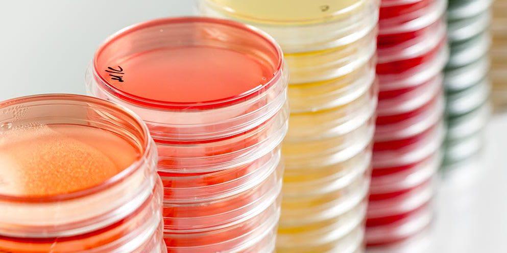 Microbiologics Blog | Where Microbiologists Go To Grow