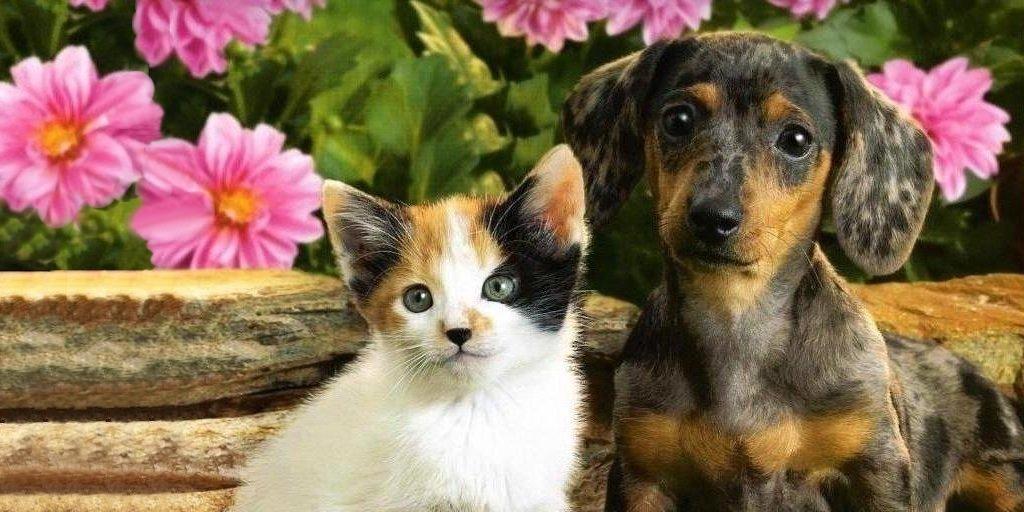 подходим картинки котята и щенки смешные и милые обманщицы если волосы